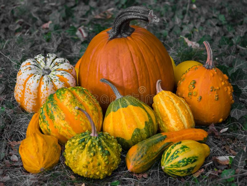 Winter squash with beautiful patterns colored in orange, yellow and green stock photography