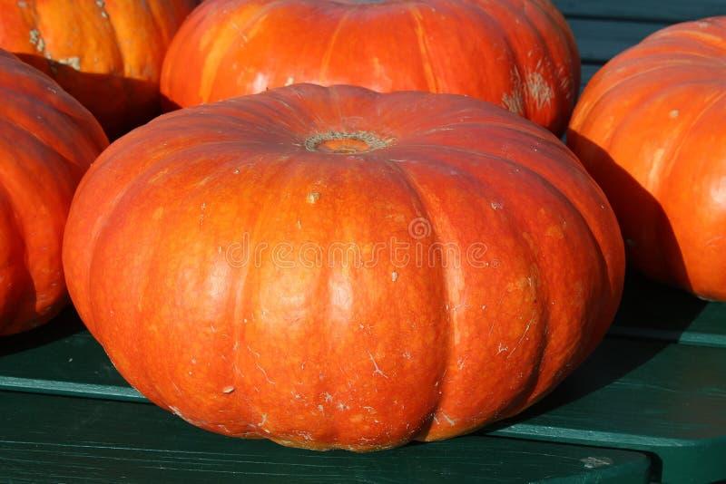 Winter Squash, Calabaza, Cucurbita, Vegetable royalty free stock photos