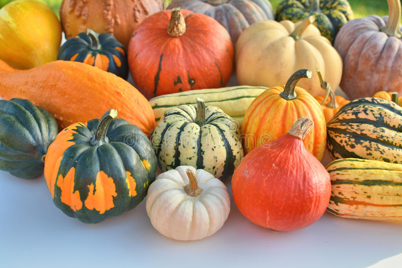 Winter squash collection stock images