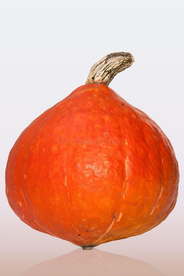 Winter Squash, Cucurbita, Calabaza, Produce stock image