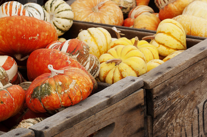 Winter Squash and Gourds royalty free stock photos