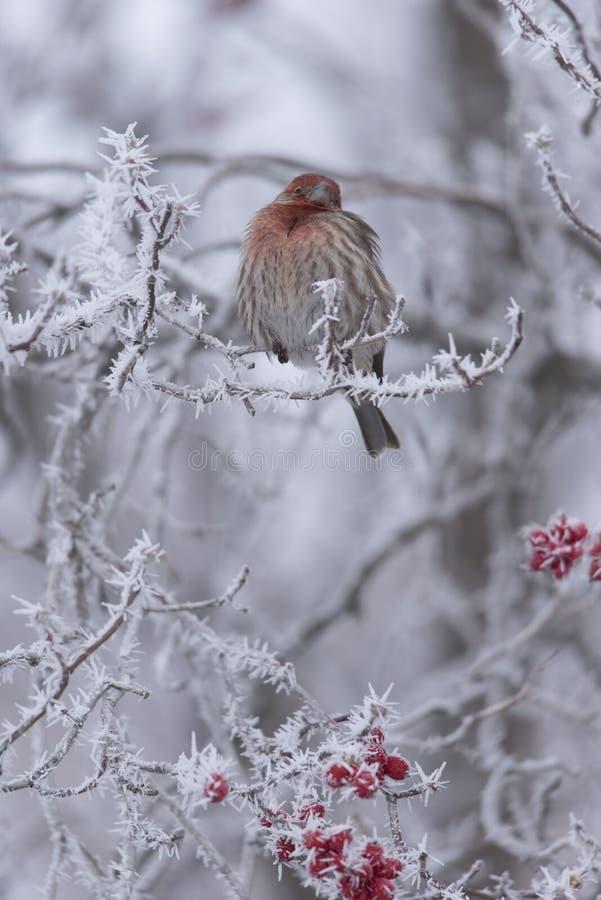 Winter-Stange II stockfotografie