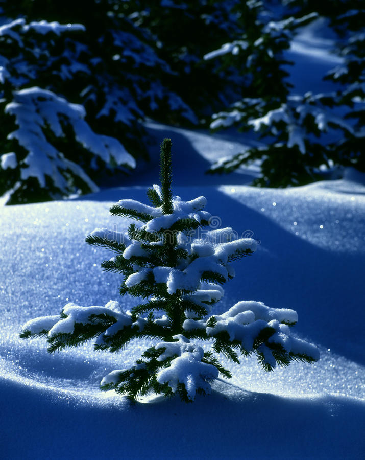 Download Winter Still Life stock image. Image of silence, theme - 11544449