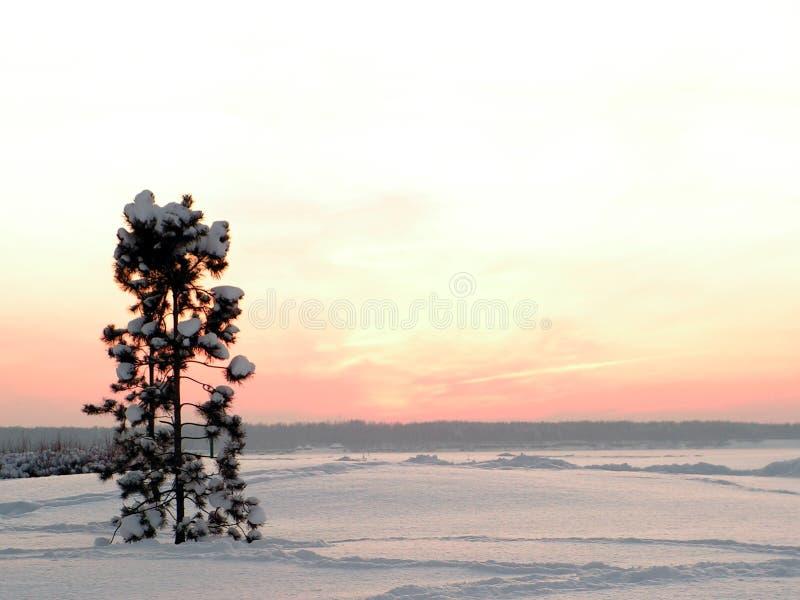 Winter still-life stock photography