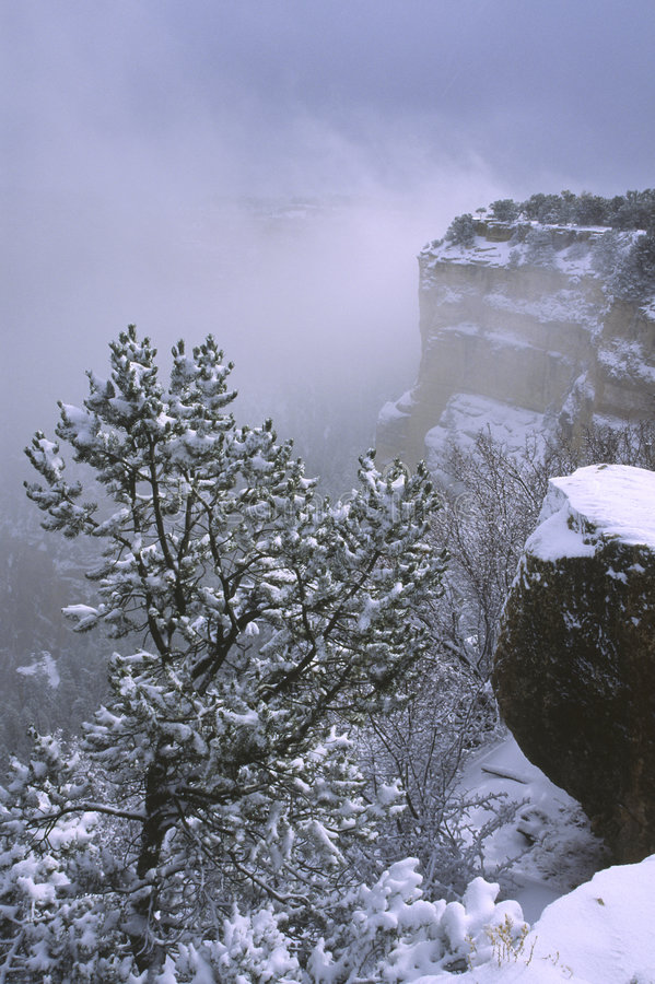 Winter storm in Grand Canyon royalty free stock photos
