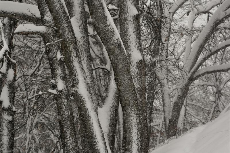 Winter Storm in the woods stock photography