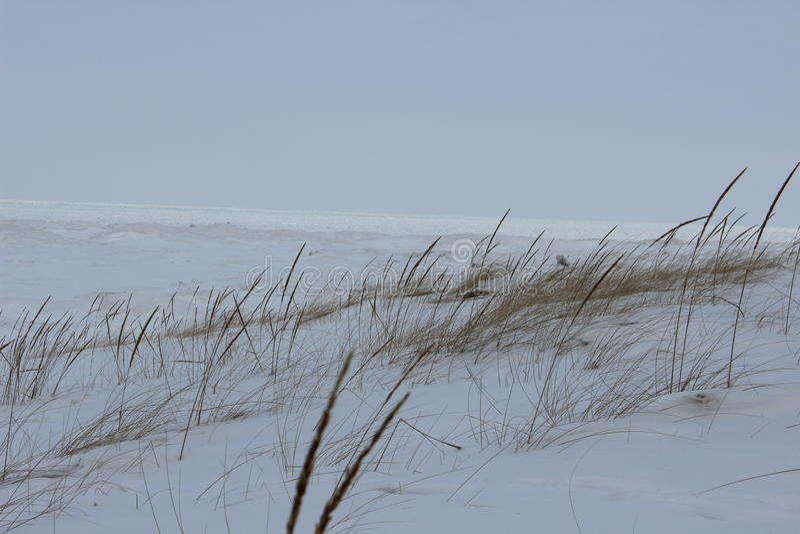 Winter-Strand-kaltes Landschaftsszenen-Dünen-Grass großer See-Eis-Gras-Schnee lizenzfreies stockbild