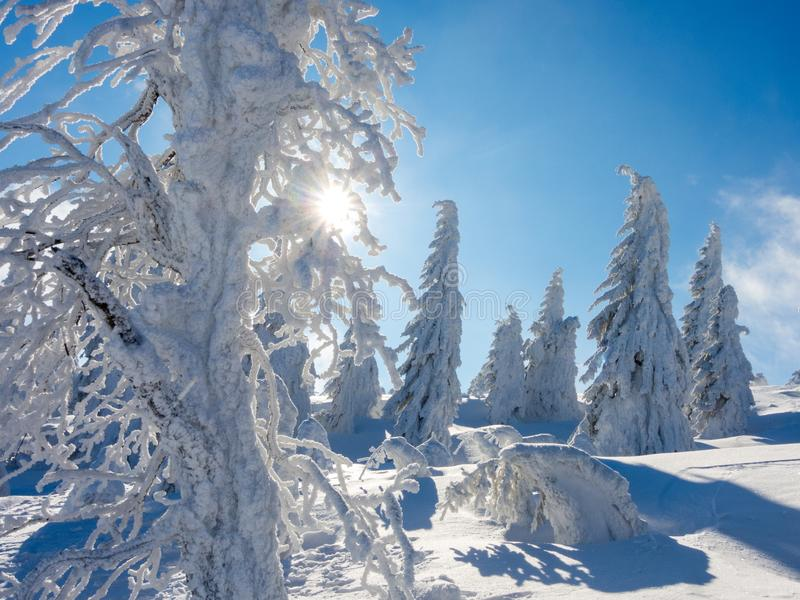 Winter in Sudety. Winter in Karkonosze Riesageberge, Giant Mountains part of Sudety mountains in Poland, frozen trees stock images