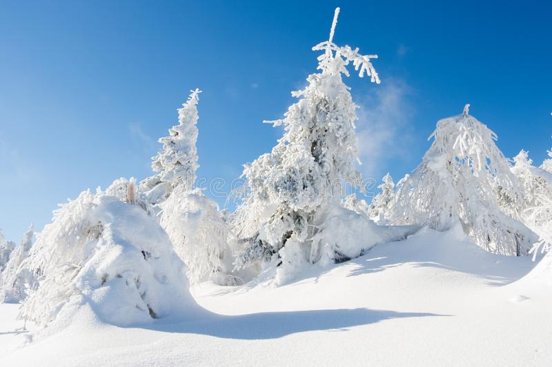 Winter in Sudety. Winter in Karkonosze Riesageberge, Giant Mountains part of Sudety mountains in Poland, frozen trees royalty free stock photos
