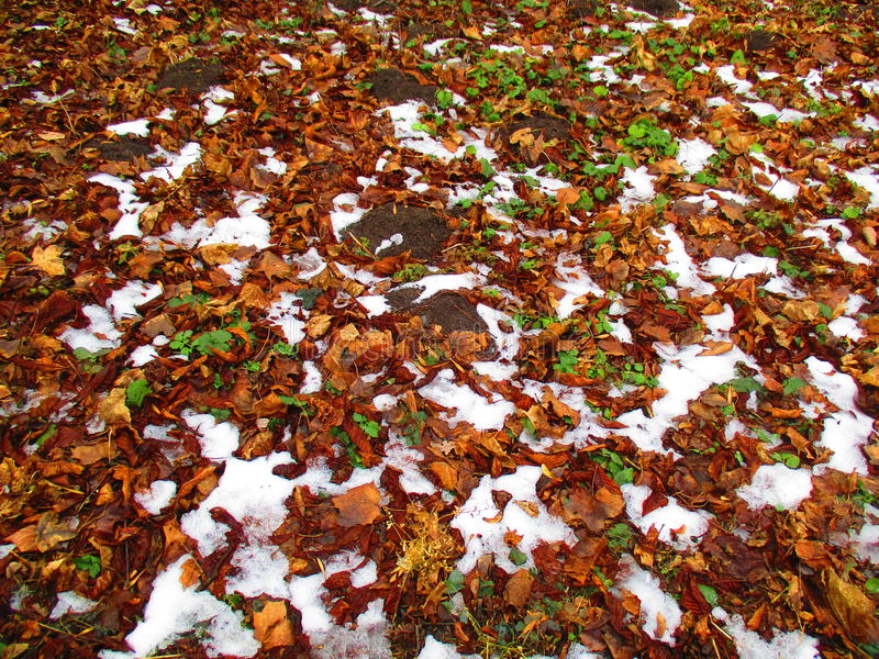 Winter, summer and autumn. Natural background, combination of winter, summer and autumn royalty free stock photos
