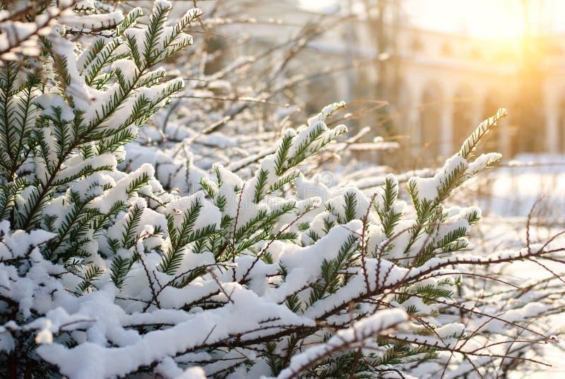 Winter sun stock photography
