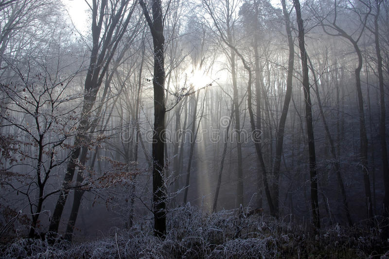 Winter Sun Light Is Coming Through the Frozen Forest Trees stock images