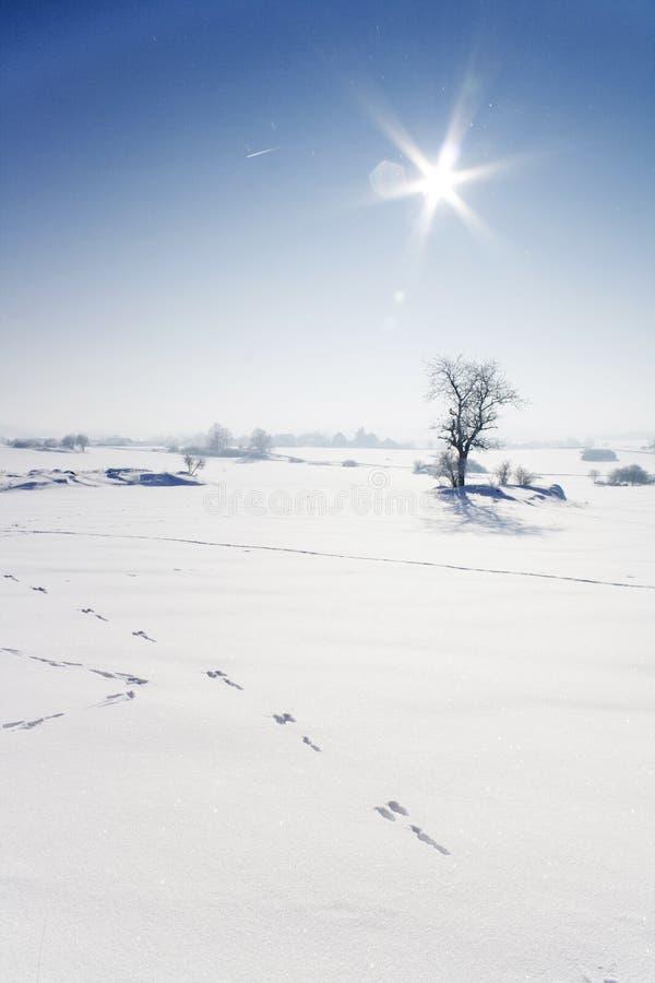 Winter Sunny Day Royalty Free Stock Photos
