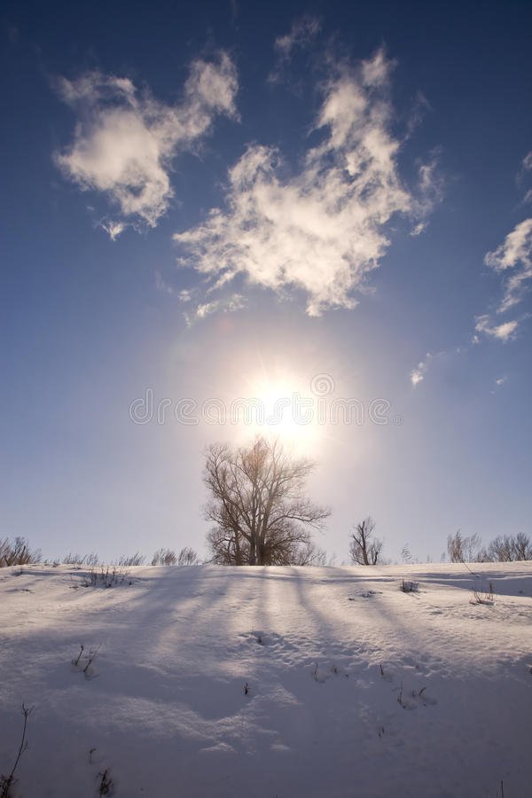 Free Winter Sunny Landscape Royalty Free Stock Images - 69203039