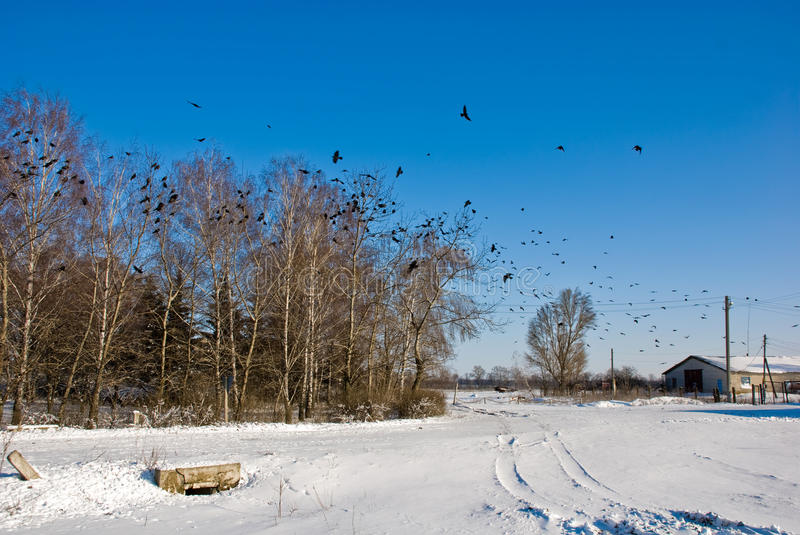 Download Winter Sunny Landscape With Flight Of Crows Stock Photo - Image of raven, bird: 12594996
