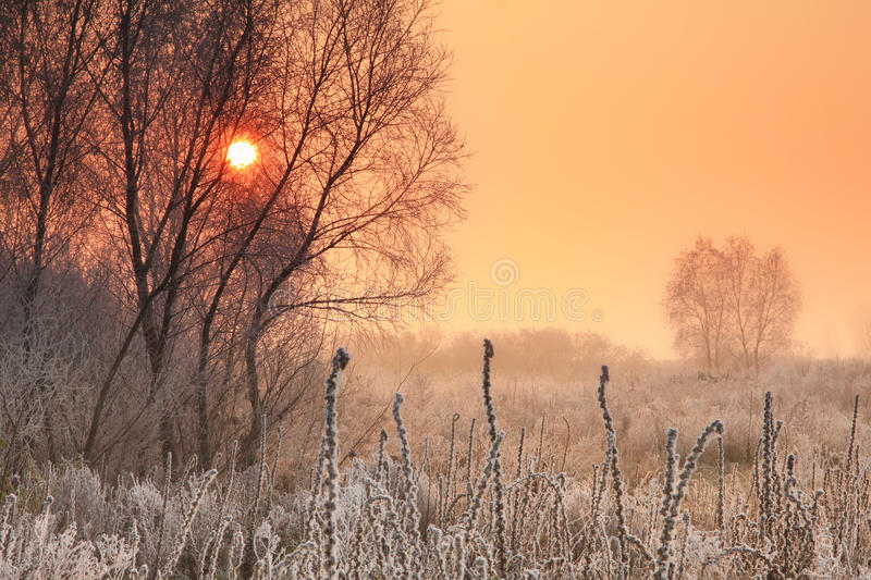 Download Winter sunrise stock photo. Image of snowy, fresh, plant - 22342190