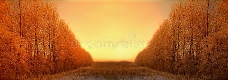 Winter sunrise royalty free stock photo