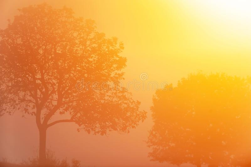 Winter by sunrise, beautiful golden sunbeam shining on couple trees and tropical fields, art shape of branches of the trees. royalty free stock photo