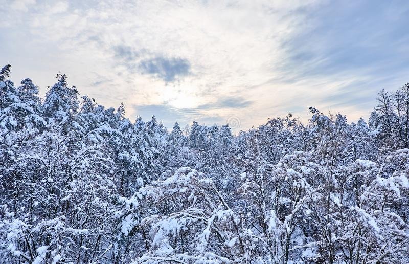 Winter sunrise view landscape with trees covered with snow. royalty free stock images