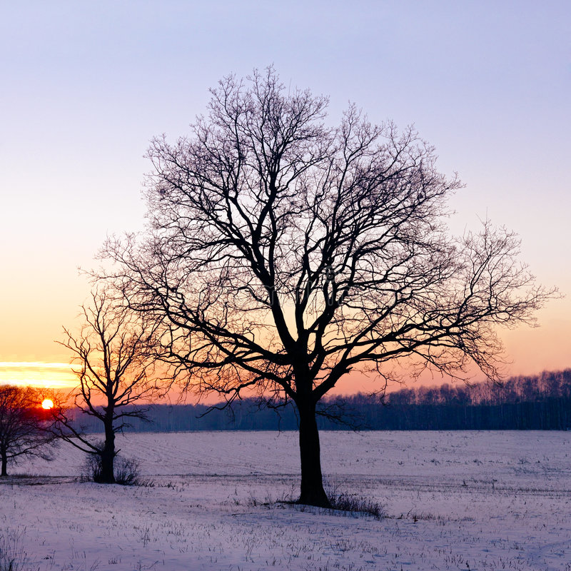 Download Winter sunset stock photo. Image of solitude, alone, sunrise - 4076908