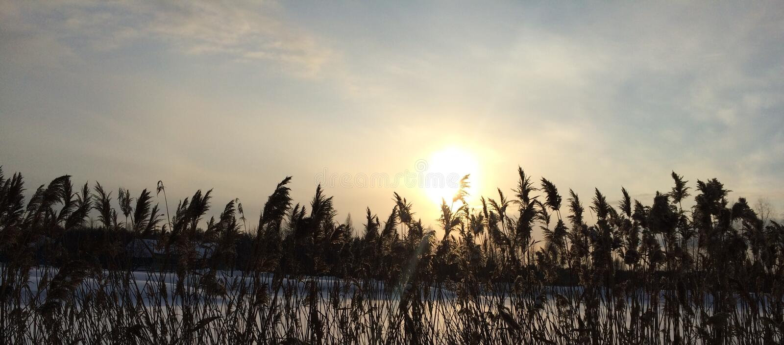 Winter sunset on a background of dry grass and blue sky stock images