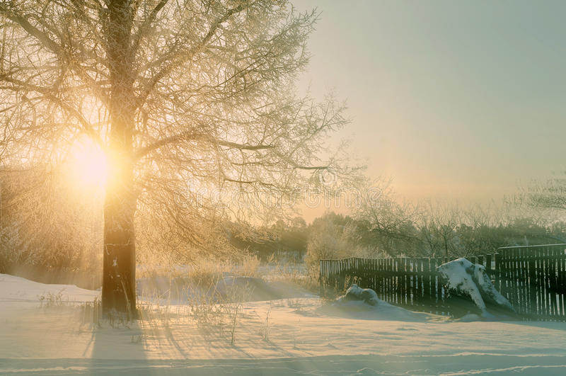 Winter Sunset Landscape With The Frosty Winter Trees And