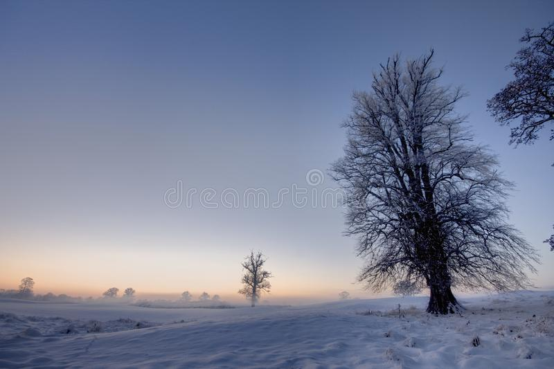 Winter sunset  with trees stock images