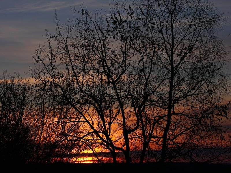 Winter sunset. Trees silhouette on sunset sky background stock images