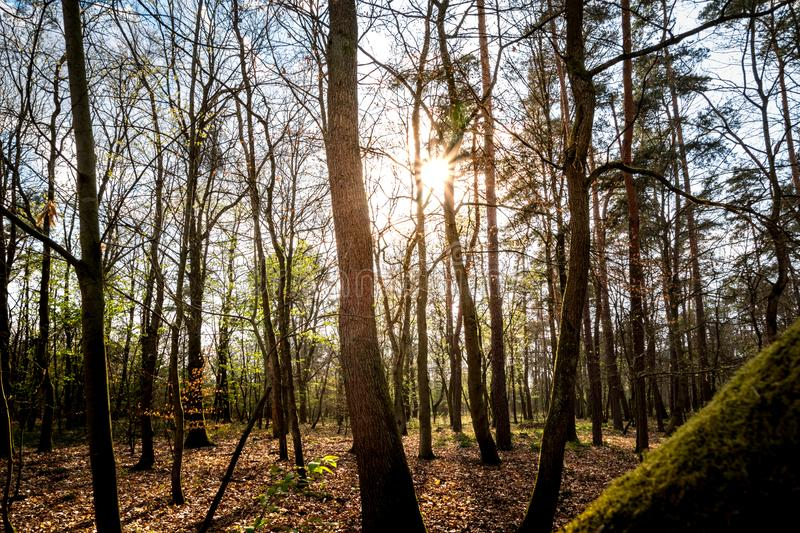 Winter sunset in the wood. The forest magnified by sun light and tree shadow. Winter sunset in the wood. The forest is magnified by the sun`s light and the trees royalty free stock photography