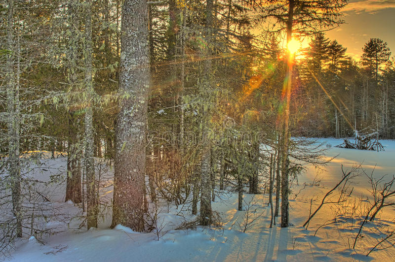Winter Sunset in Woods royalty free stock image