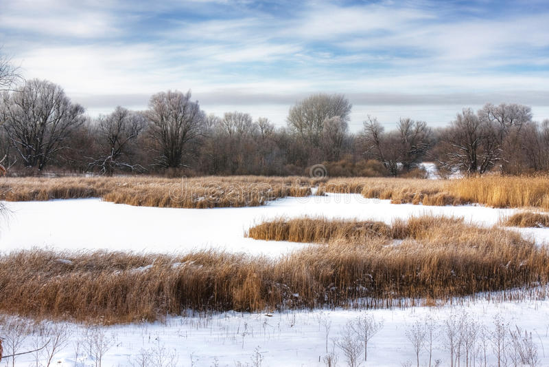 Winter Swamp Royalty Free Stock Image