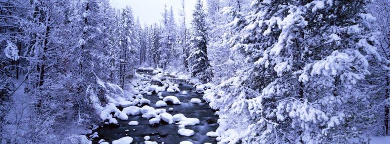 Winter-Szene lizenzfreies stockfoto