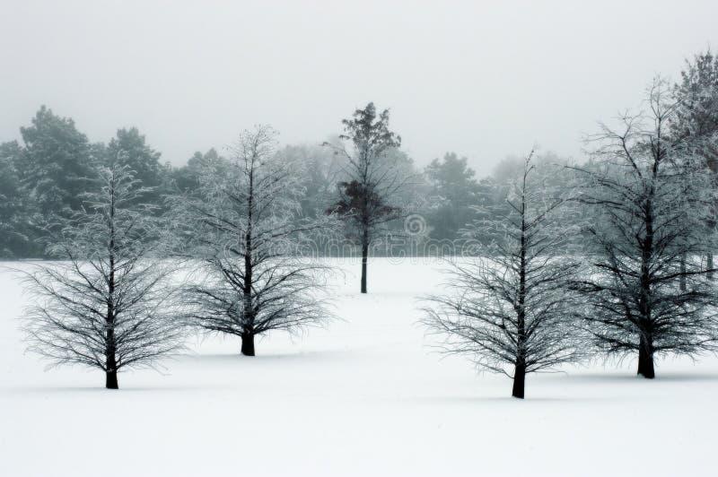 Winter-Szene lizenzfreie stockbilder