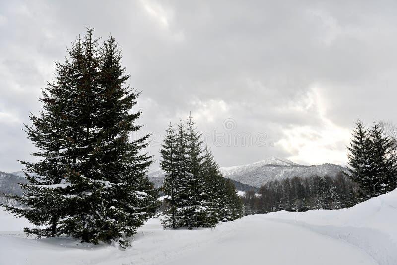 Winter szenisch im Hokkaido lizenzfreie stockbilder