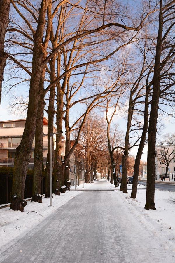 Winter in Tallinn Estland stockbilder