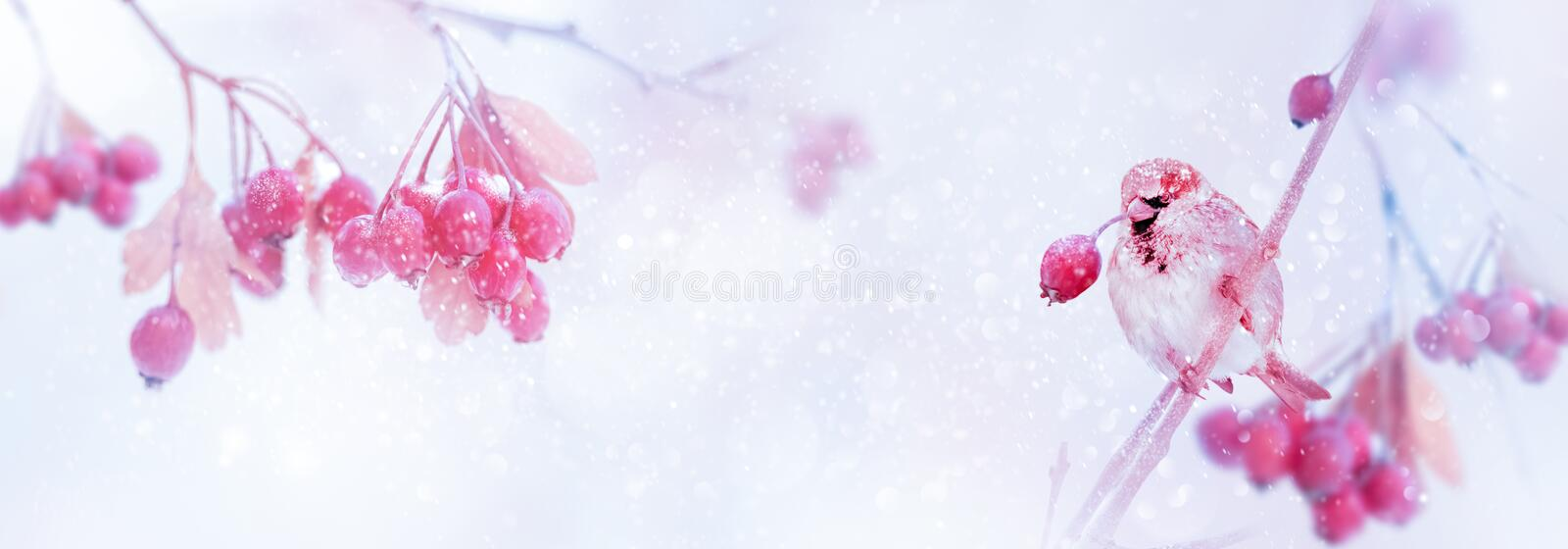 Winter tender magic forest tale. Pink and purple  bright berries and sparrow in a snowy park. Winter and autumn concept. Free space for text. Wide format stock image