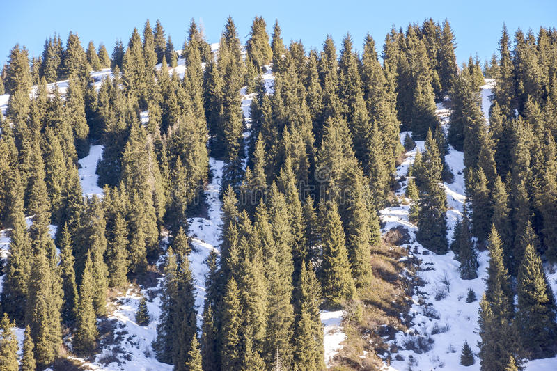 Winter in Tien Shan mountains stock photo