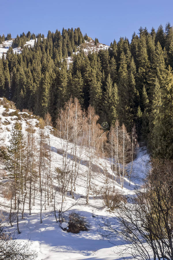 Winter in Tien Shan mountains royalty free stock photos