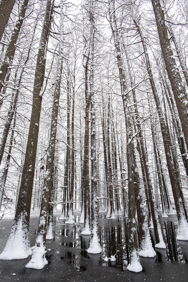 Winter time landscape in the forest with fresh snow , Romania , Europe. Winter landscape in the forest with fresh snow , Romania , Europe royalty free stock photo