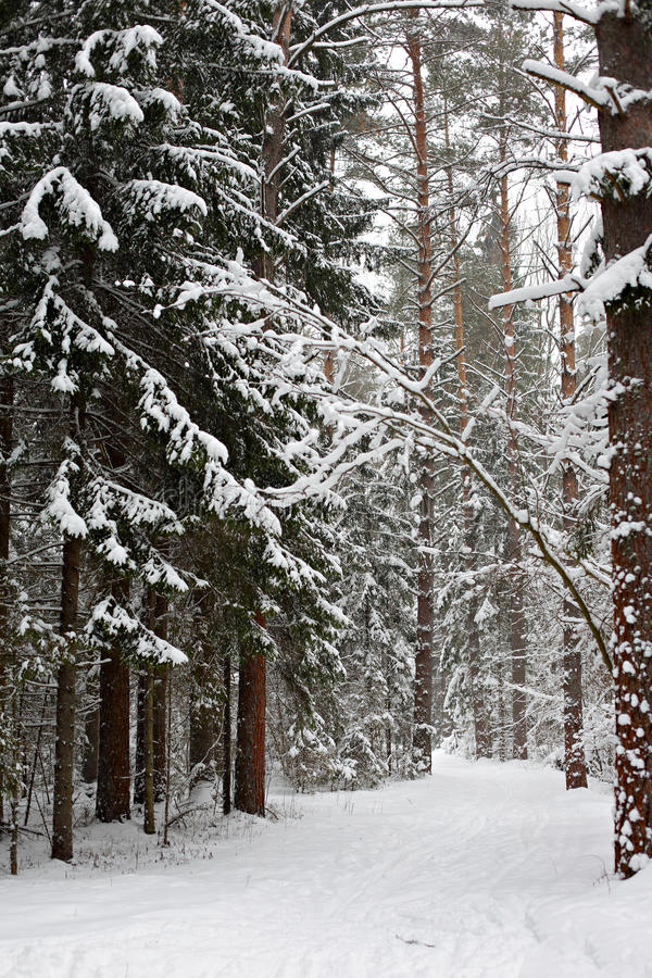 Winter trail royalty free stock photography