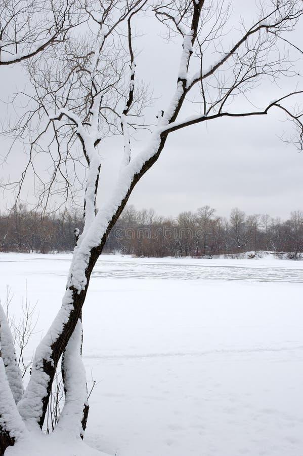 Free Winter Tree 1 Royalty Free Stock Photography - 560307