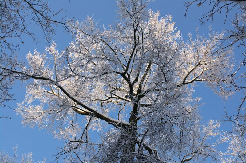 Winter tree stock photography