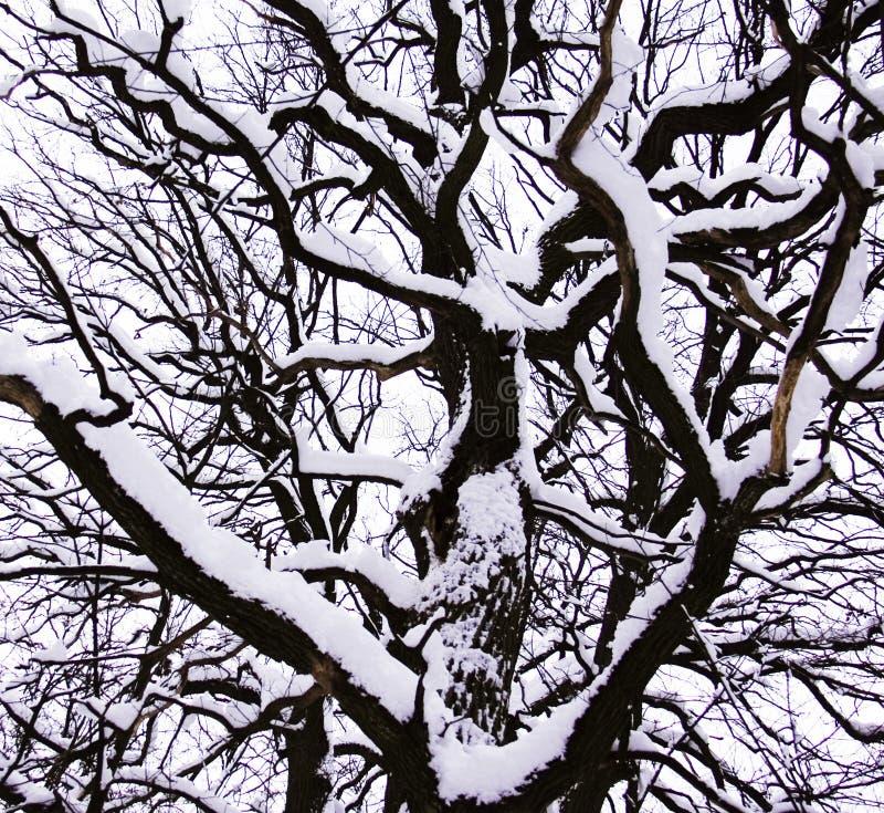 Free Winter Tree Stock Photos - 15200943