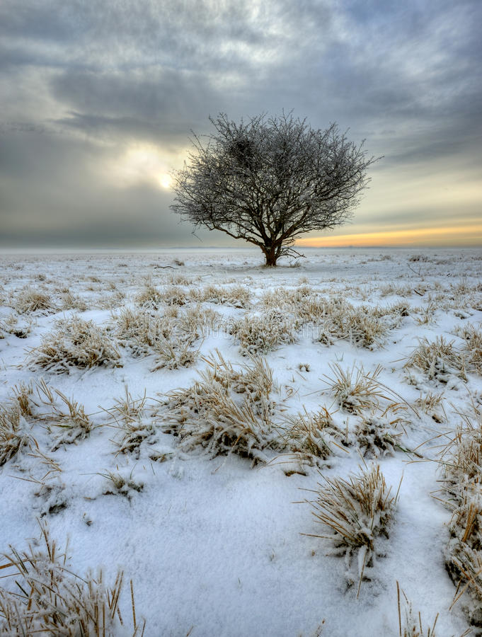 Download Winter Tree Royalty Free Stock Photos - Image: 17559218
