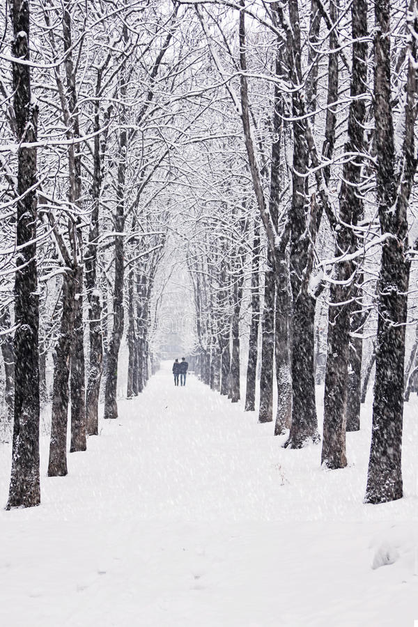 Download Winter tree alley stock image. Image of cool, alley, flake - 29048767