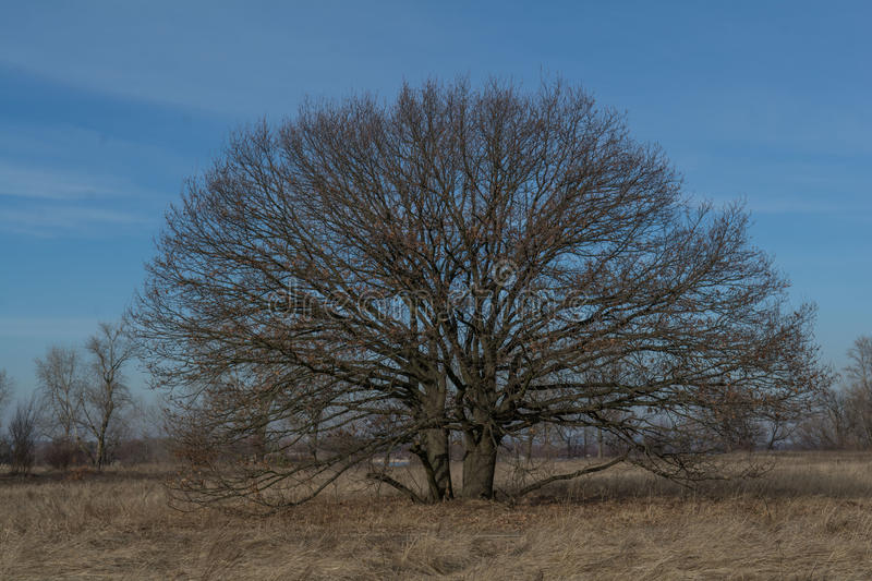 Winter, tree. Autumn, winter, tree, day, clear sky, clouds, grass, clouds, grass, dead, road, trail, leaves, flowers, branches, twigs, space, freedom stock photography