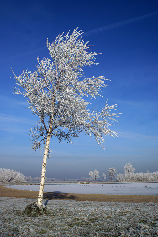 Winter tree with blue sky royalty free stock images
