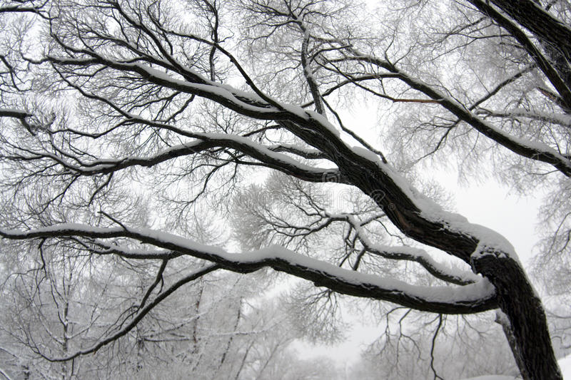 Download Winter tree branch stock image. Image of outdoor, branchlet - 12533827