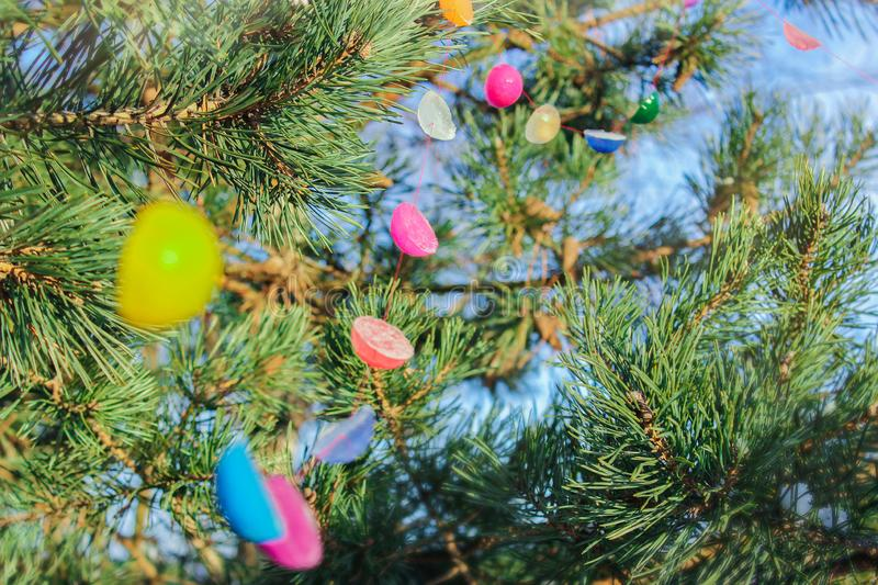 Winter tree decoration garland of colored ice. hand-made royalty free stock image