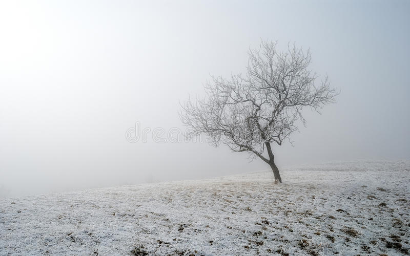 Lonely tree with fog in winter season royalty free stock image